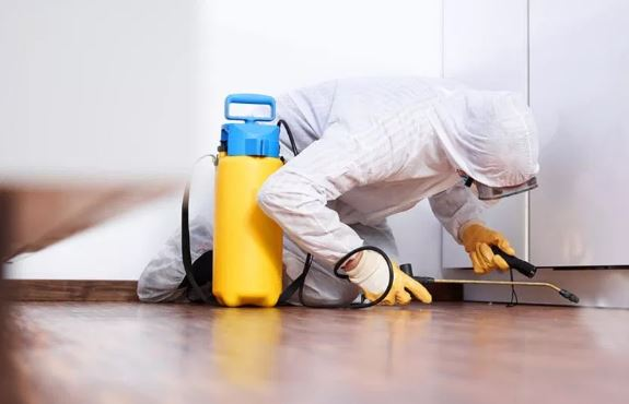 Keep Your Kitchen Pest Free
